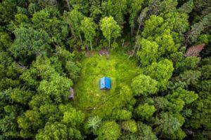 Первые положительные результаты «лесной амнистии»