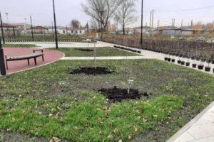 В Приданниково 9 октября 2019 года высадили деревья и кустарники в будущем месте отдыха жителей – обустраиваемой общественной территории.