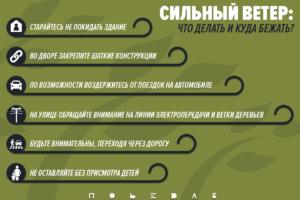 19 сентября в Свердловской области сильный ветер.